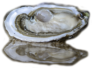 OYSTER_CLOSEUP2_smart_low